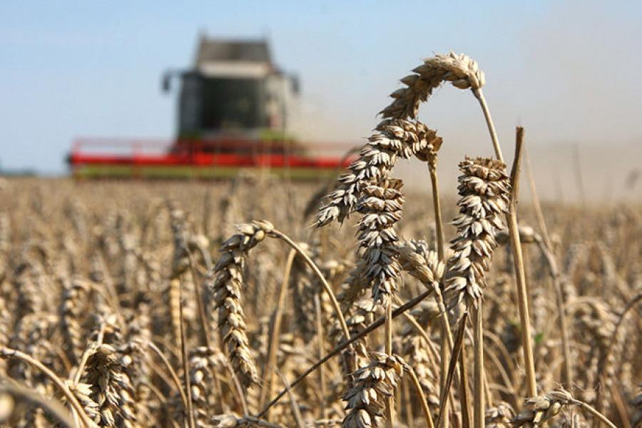Объем заготовки кормов аграриями области составил более 70 процентов