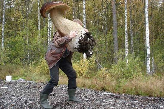 Будьте осторожны в лесу