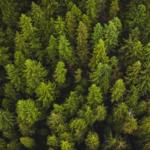 В 2019 году в Архангельской области восстановлено более 76 тысяч гектаров лесных насаждений