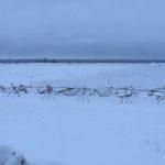 Северная Двина в районе Березника Виноградовского района сегодня