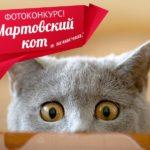 """Подводим итоги конкурса """"Мартовский кот и кошечка"""". Открыто голосование!"""