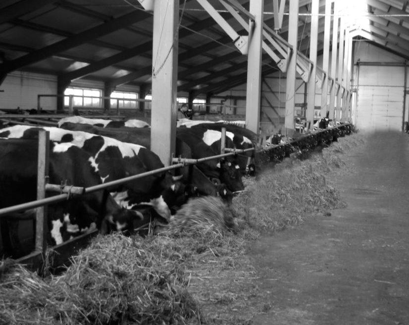 В Виноградовском районе животноводством занимаются четыре сельскохозяйственных предприятия