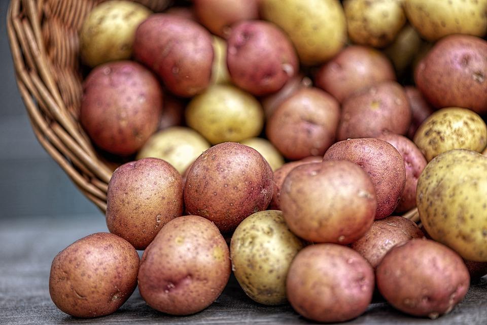 Картофелеводством в Виноградовском районе занимается СПК «Заостровский»