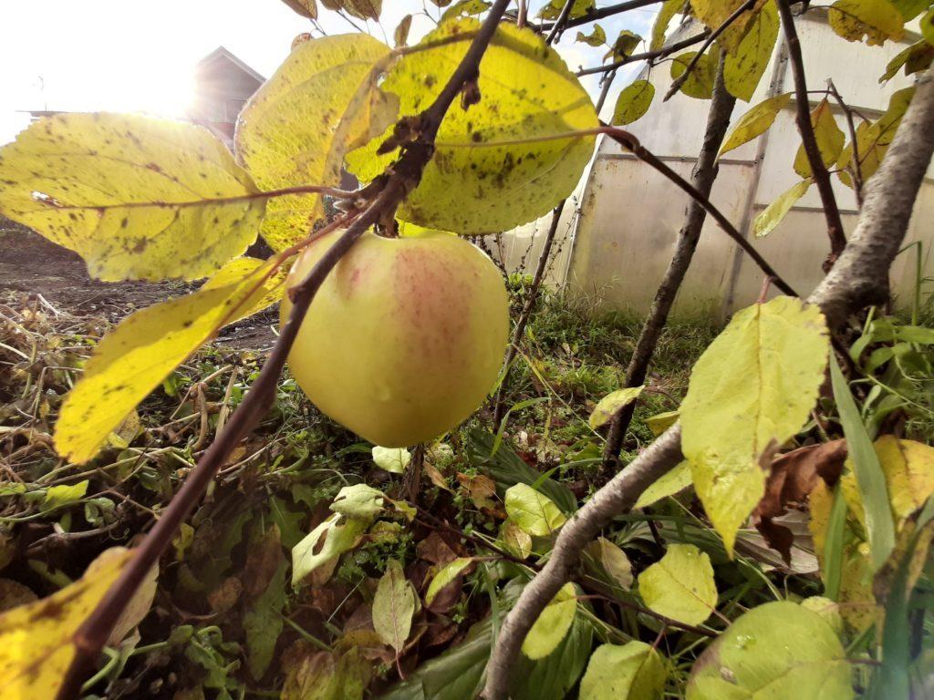 Даже яблони на соседнем участке будут учтены в блоке поправок