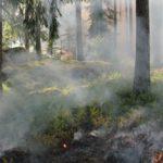 Виноградовцев предупреждают об опасности весеннего пала травы