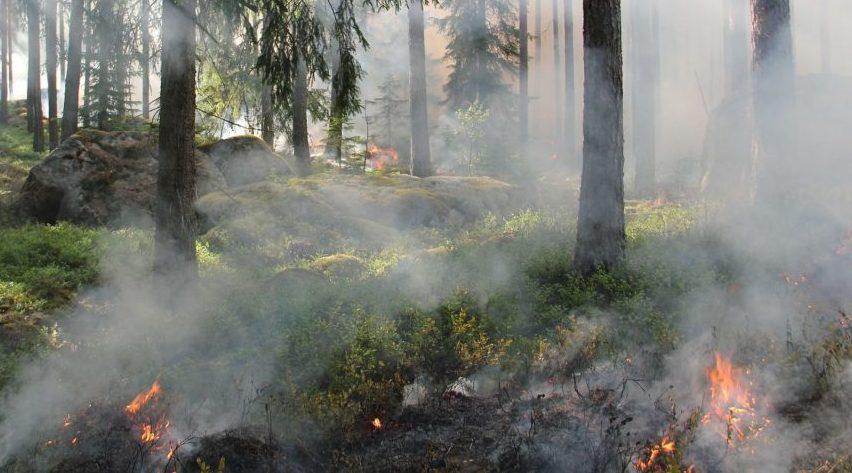 Весенний пал травы — опасность для людей и угроза для природы