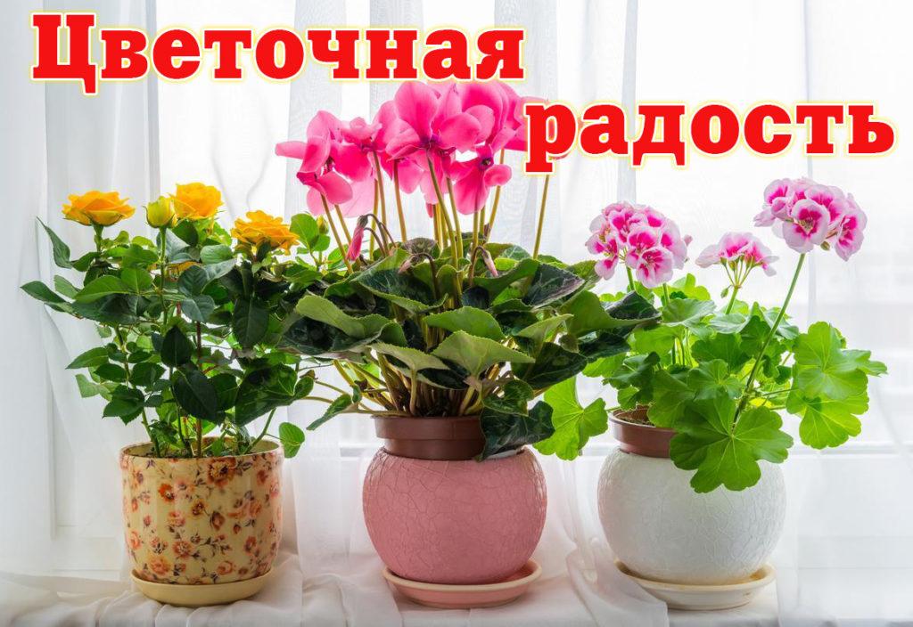 Внимание: новый конкурс от «Двиноважья»! Цветочные радости Виноградовского района!