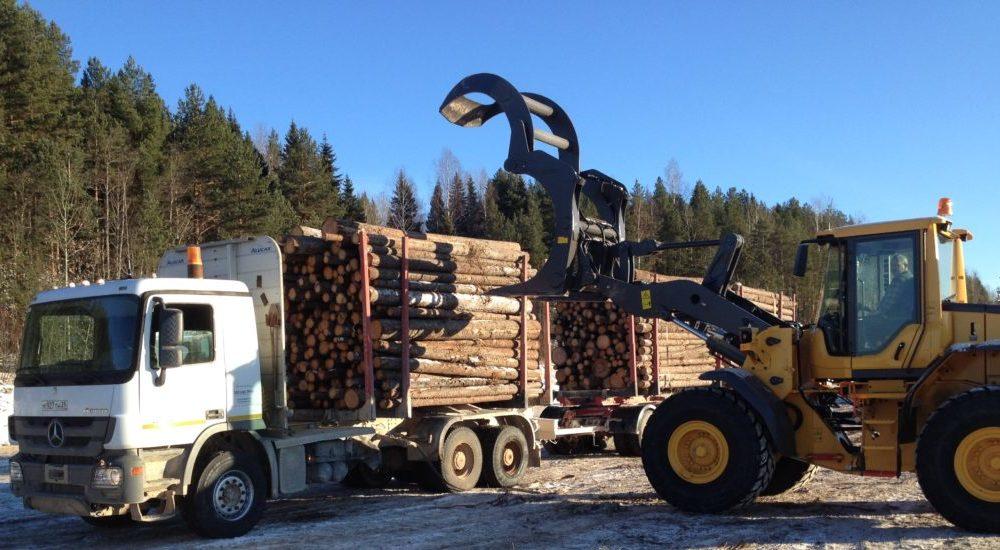 Лесному бизнесу Поморья предоставили отсрочку уплаты аренды за пользование лесными участками