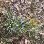 Весна пришла в Виноградовский район