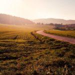 Вниманию налогоплательщиков Виноградовского района: при использовании земельного участка не по назначению ставка налога может быть увеличена