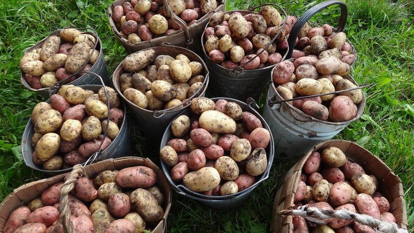 В сельхозпредприятиях Виноградовского района подводят итоги сезона