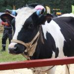 По распоряжению Александра Цыбульского в Поморье увеличен размер субсидий для производителей молока