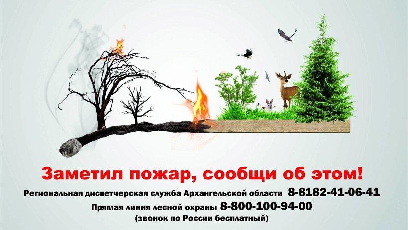 Грозы стали причинами сразу шести пожаров в лесах Поморья. Самый большой — в Виноградовском районе
