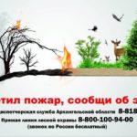 В Поморье в мае ликвидировано два лесных пожара