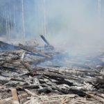 Грозы стали причинами сразу шести пожаров в лесах Поморья. Самый большой - в Виноградовском районе