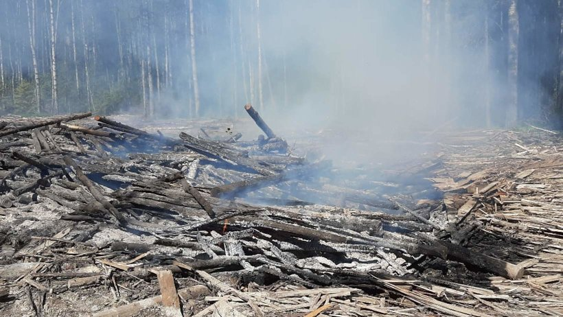 Девять лесных пожаров произошли в регионе на прошлой неделе, в том числе в Виноградовском районе