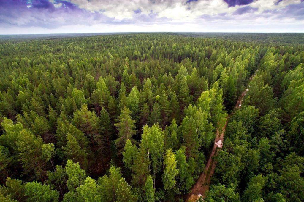 Виноградовский леспромхоз ведет ремонт лесных дорог