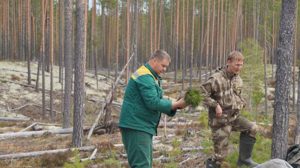 Об охране лесов