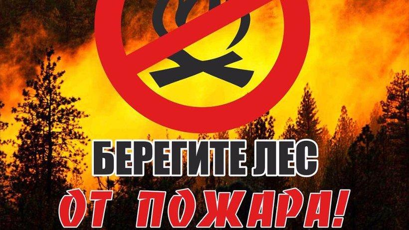На 11 августа действующих лесных пожаров в Поморье не зафиксировано