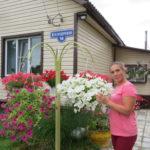 Галина Шеина - хозяйка цветущей усадьбы в поселке Рочегда Виноградовского района