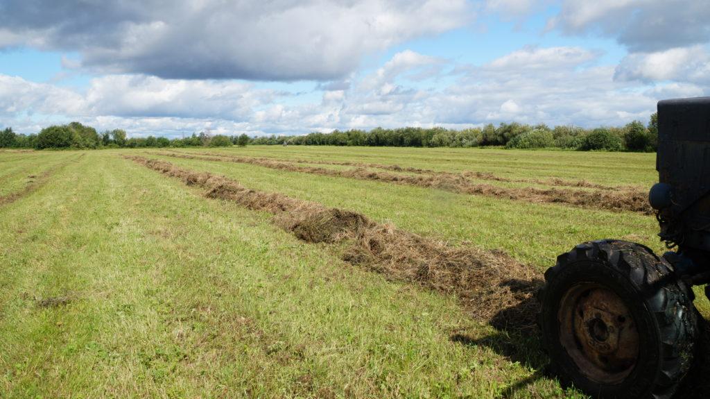 В хозяйствах Виноградовского района завершилась  сенокосная страда