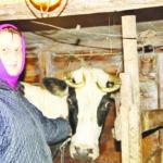 Валентина Ярцева, поселок Пянда: «Свое подворье – лучшее подспорье!»