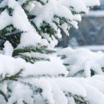 Березниковское лесничество приглашает оформить новогоднюю ель