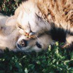 Законопроект об обязательной регистрации кошек и собак внесен в Госдуму