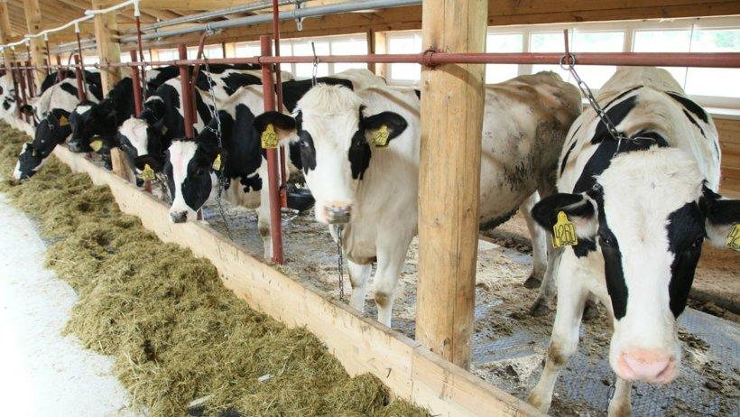 В Поморье открыт прием заявок на получение грантов на развитие крестьянских (фермерских) хозяйств и семейных ферм