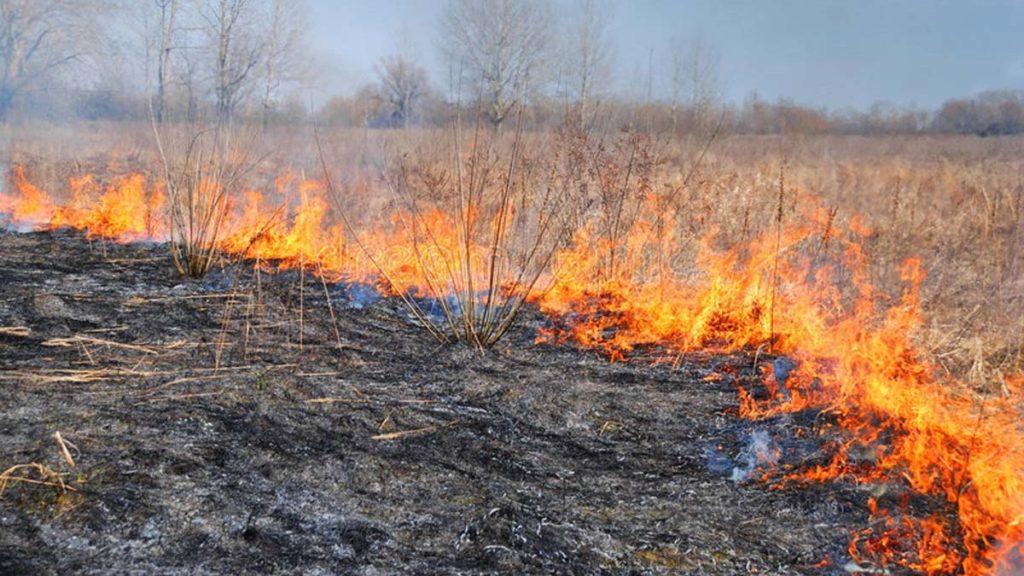 МЧС напоминает: пал сухой травы очень опасен!
