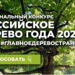 Северян приглашают проголосовать за «Российское дерево года-2021»