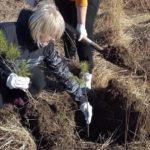 В рамках акции «Сад Памяти» в Поморье планируется высадить более миллиона деревьев и кустарников