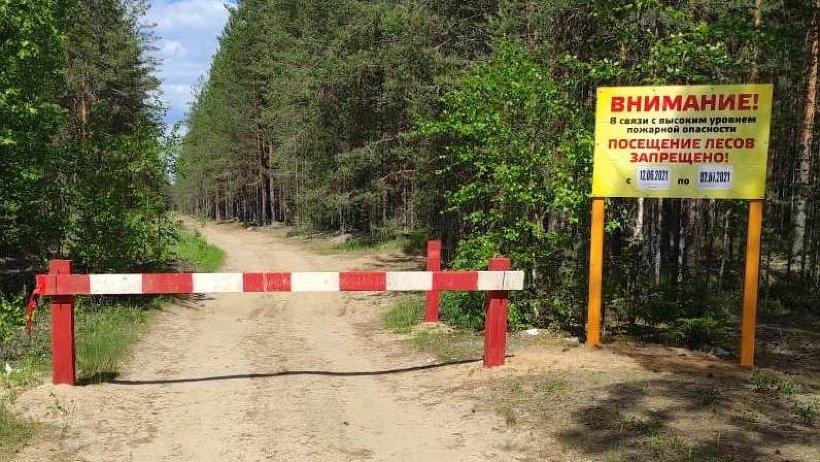 Продолжается противопожарное обустройство лесов Поморья