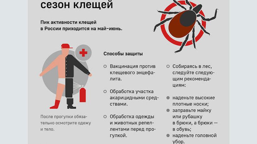 В Поморье участились случаи укусов клещами