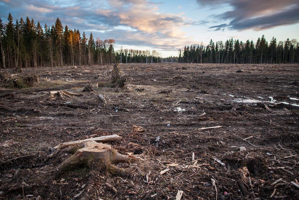 Ответственность за повреждение и уничтожение лесных насаждений