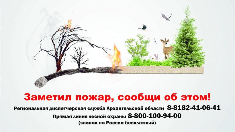 Сложный лесной пожар в Березниковском лесничестве