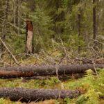 Как собрать дрова в лесу и не заработать срок