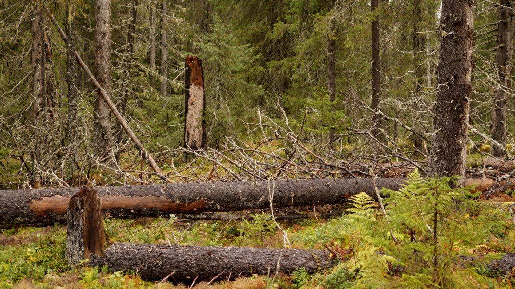 Эксперимент по федеральному надзору в лесах Поморья оценивают специалисты Рослесхоза