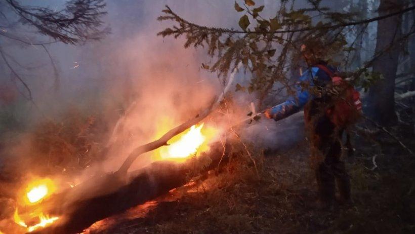 Северянам напоминают: в лесах необходимо строго соблюдать правила пожарной безопасности