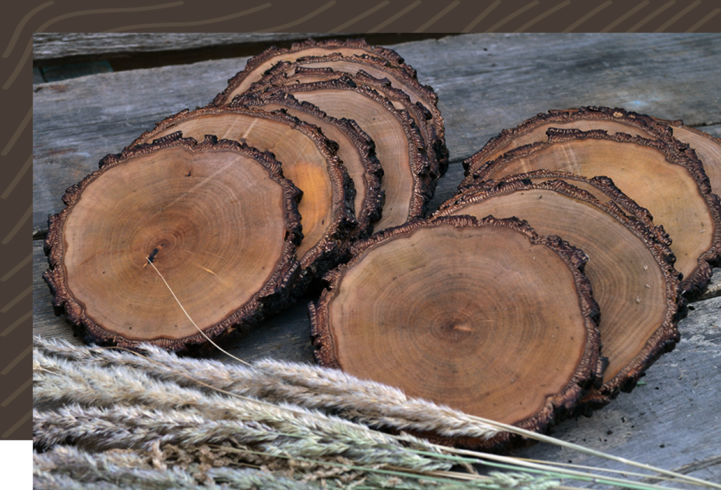 Лесопользователи региона должны представить сведения в систему учета древесины и сделок с ней