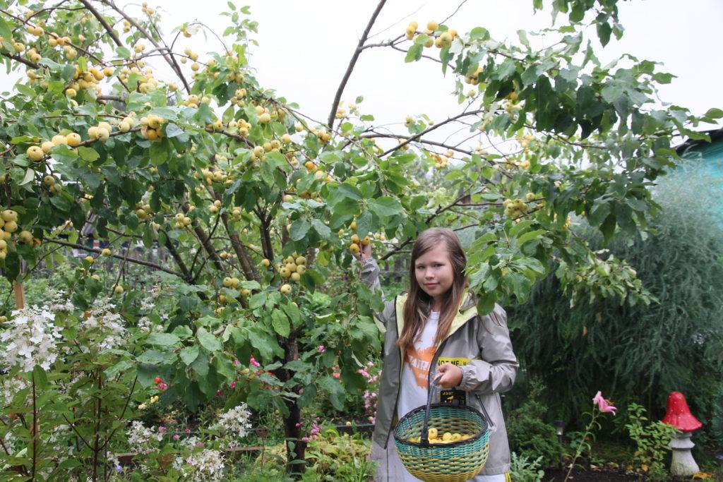 Яблочный Спас всем яблок припас!