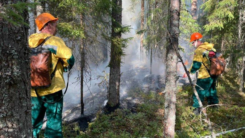 Участников ликвидации лесных пожаров в Поморье представят к наградам