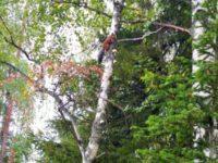19 сентября — День работников леса