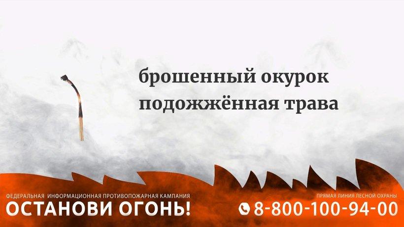 Пожароопасный сезон продолжается: наибольшая площадь, пройденная огнем,– в Березниковском лесничестве