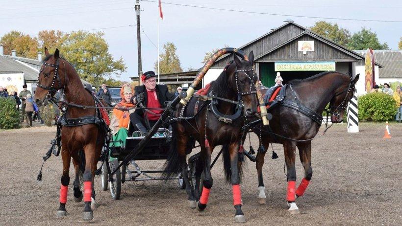 Лошади из агрофирмы «Вельская» продолжают занимать призовые места на всероссийских турнирах